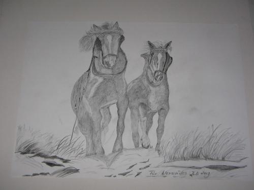 pferde im galopp