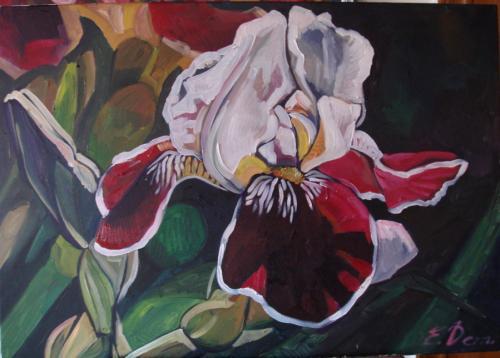 Zweifarbige Iris