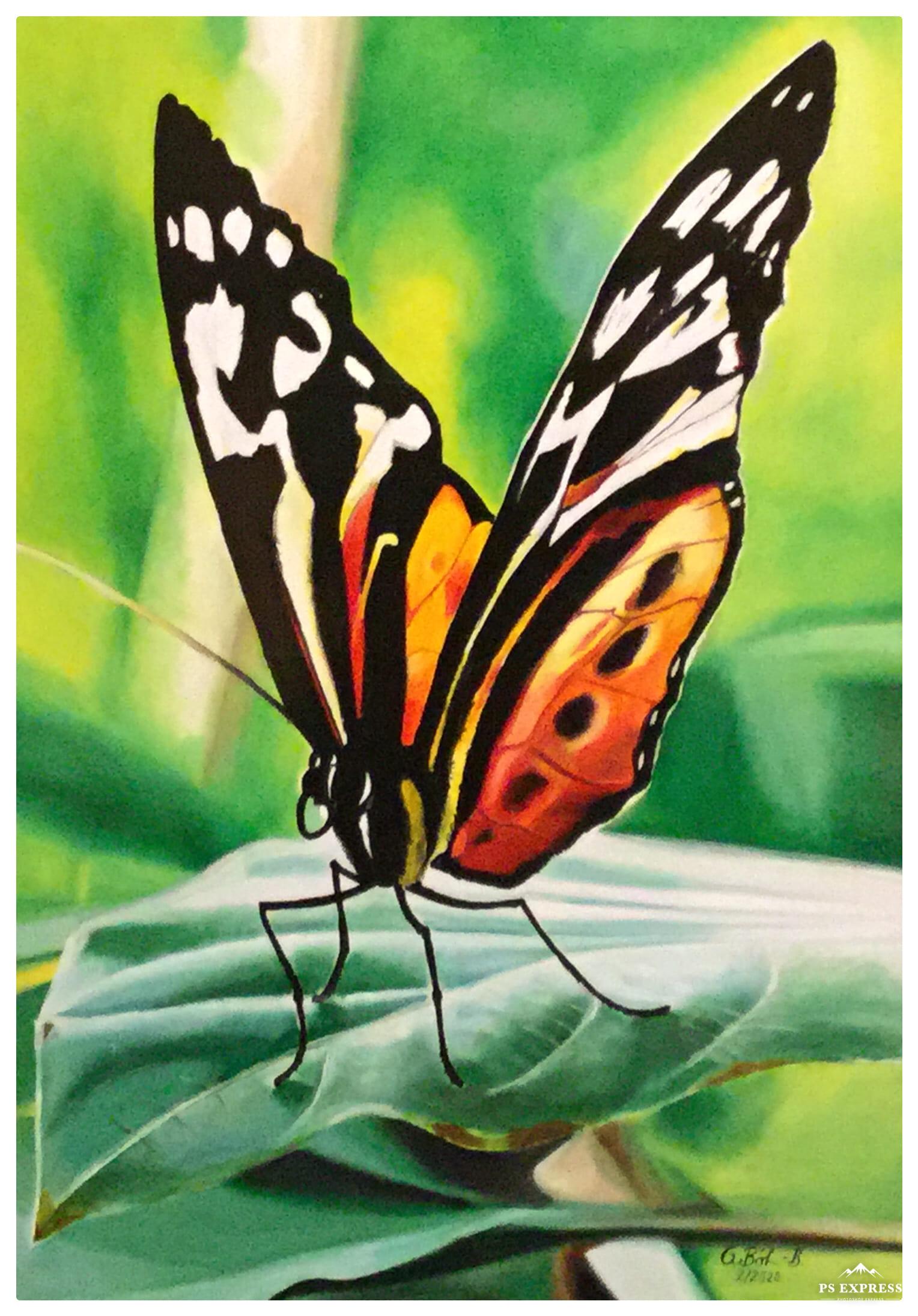 'Schmetterling' von Galdino BB