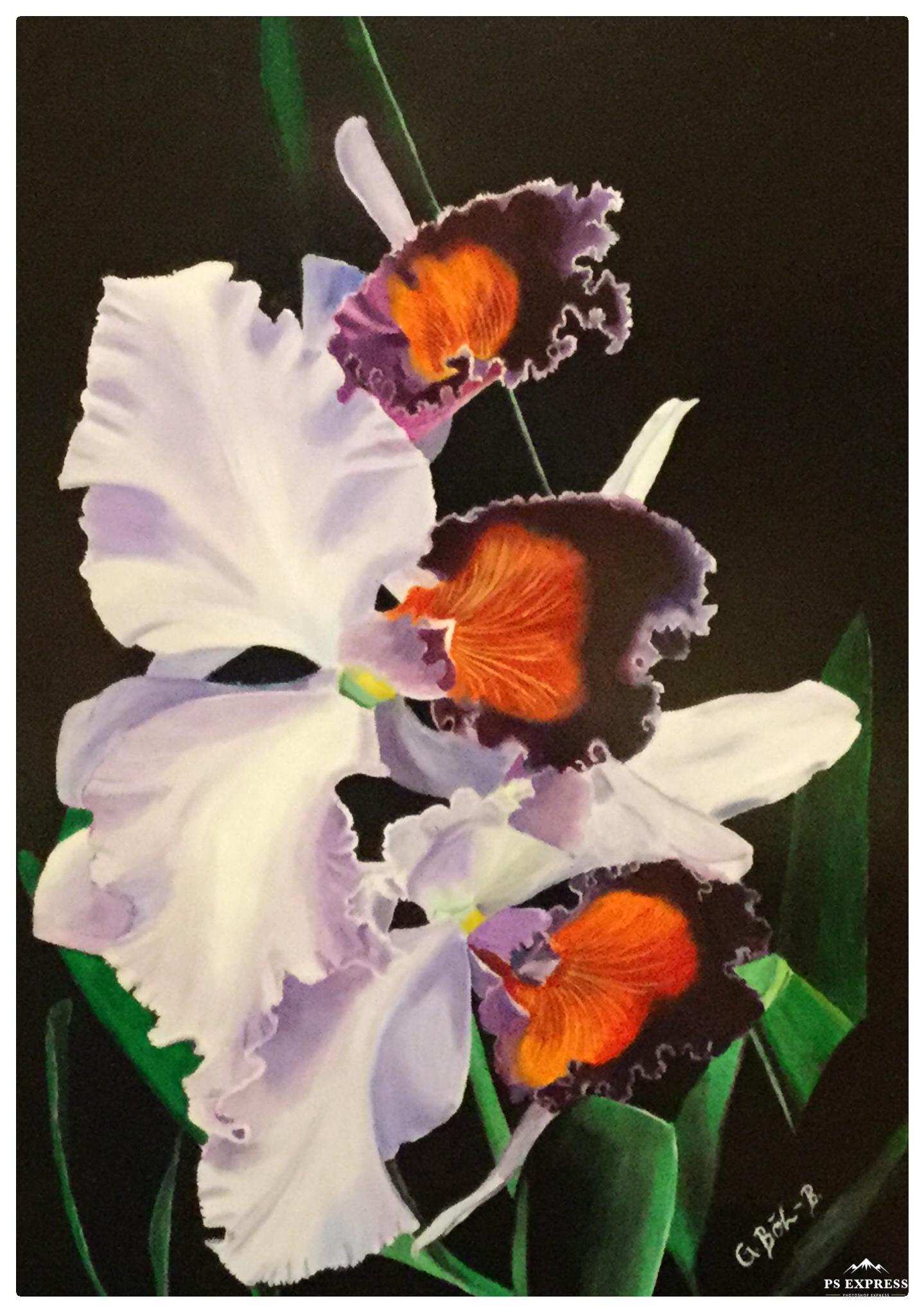 'Orchidee' von Galdino BB
