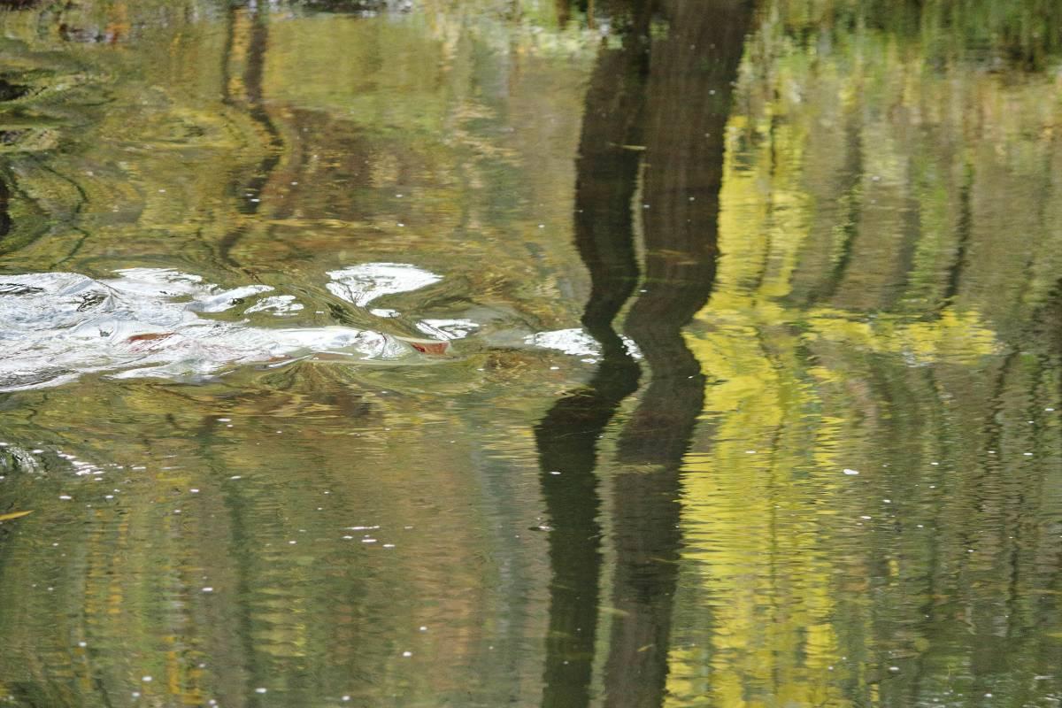 'Spiegelung am Bach' von FotoArt