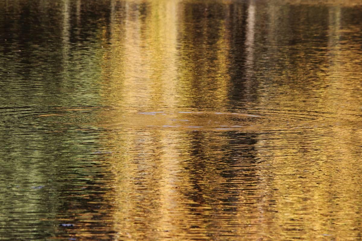 'Herbstliche Wasserspiegelung' von  FotoArt