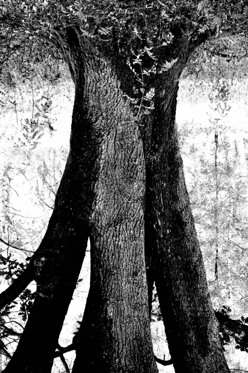 'Human Nature II' von Artejo
