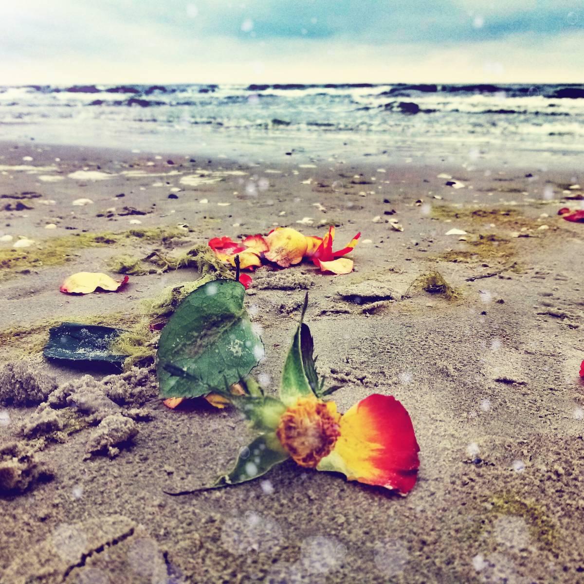 'Flowers by the Sea' von Wellborn Art