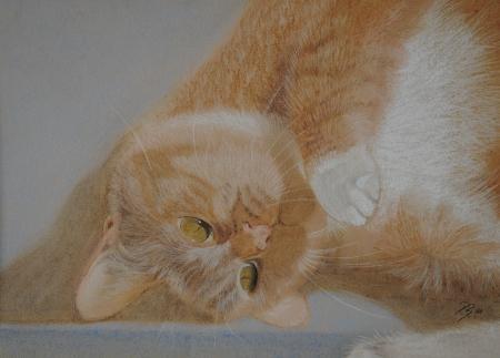 'Katze' von  pebu