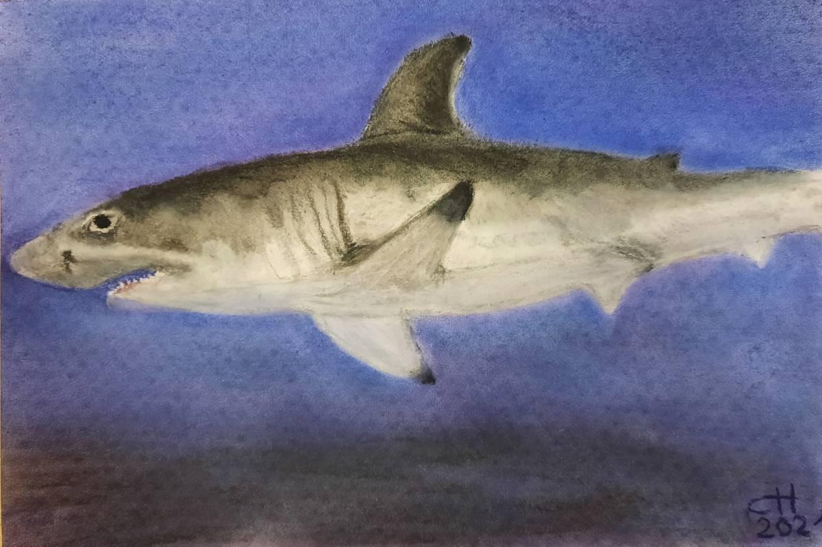 'weißer Hai' von  Corina