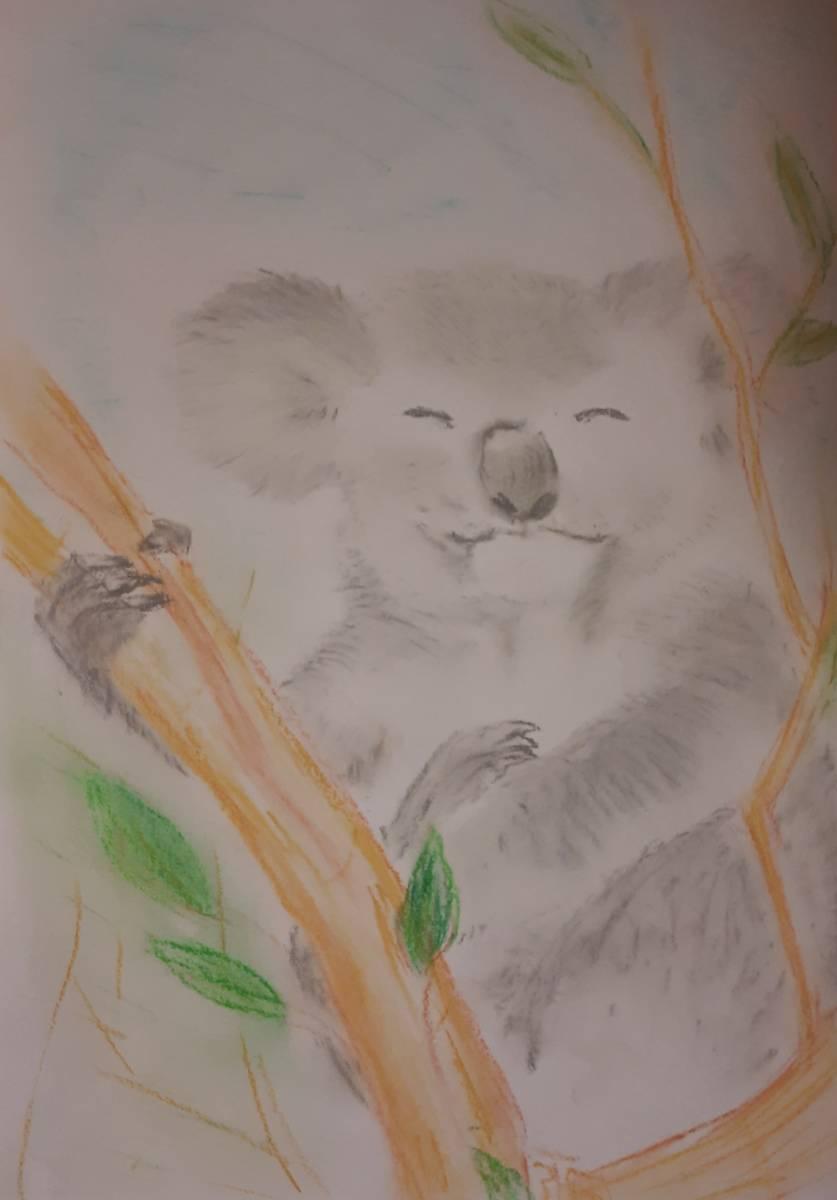 'Koala 1' von  Corina