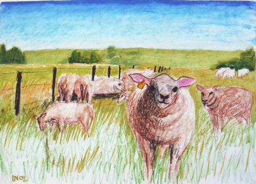 Schafe auf Ameland