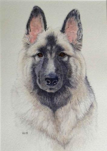 Andrews dog