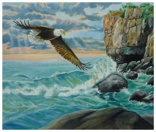 Seeadler auf der Jagd