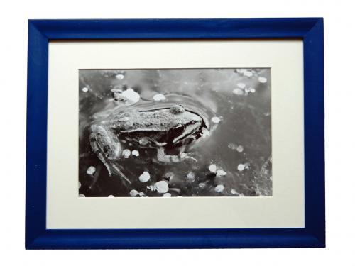 ein Frosch im Wasser in schwarz / weiß