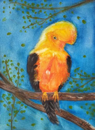 Andenklippenvogel
