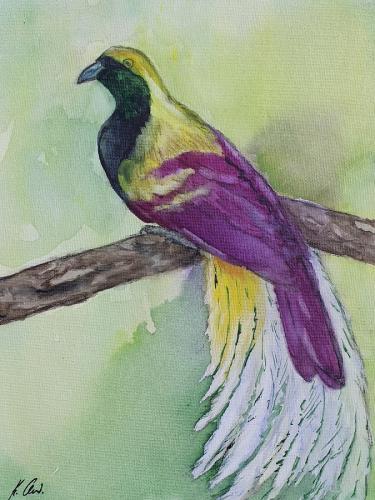 Paradiesvogel