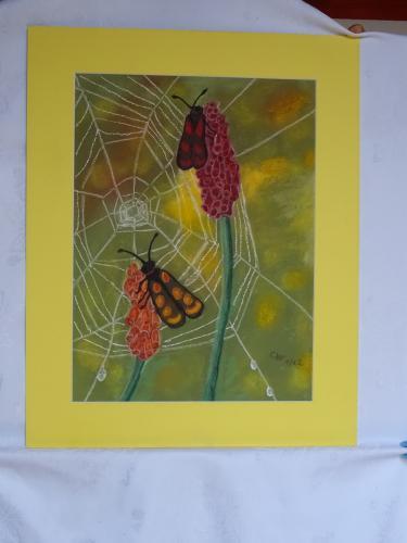 Widderchen vor Spinnennetz