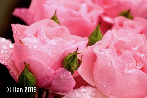 'Blüte 3' von  Ilan