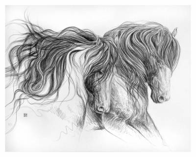 STUDY OF FRISIAN HORSES