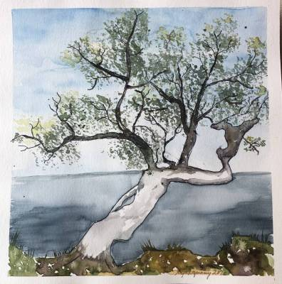 Olivenbaum am Meer