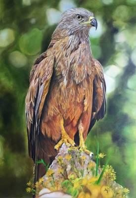 Golden Adler