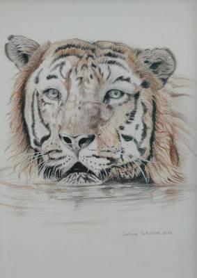 Badender Tiger