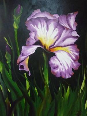 """""""Iris lila"""""""