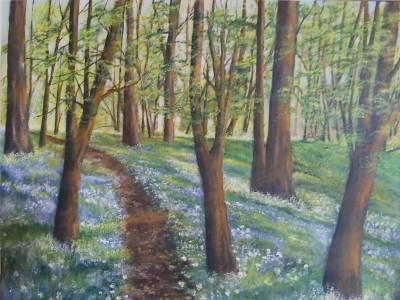 Frühling im Buchenwald
